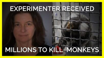 UMass Experimenter Received Millions To Torment and Kill Monkeys