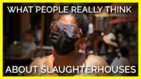 What do people REALLY think about slaughterhouses?