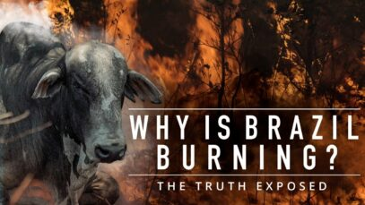 Why is Brazil Burning? The Meat Industry Exposed