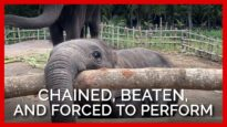 You Have to See What Workers Did to Elephants At This Thai Zoo