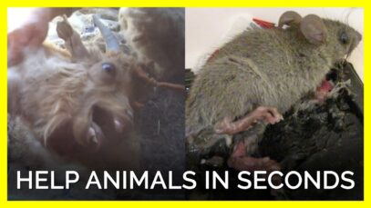 Your Action Is Urgently Needed to Help These Animals