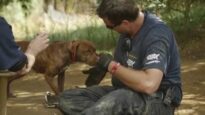 50 Dogs Rescued from Suspected Dogfighting Operation