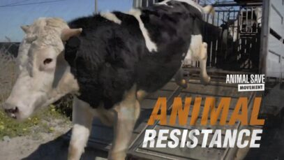 Animals fight for their lives until their very last breath