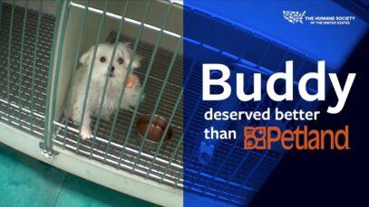 Buddy deserved better than Petland.