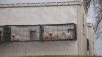 Chicago Pet Store Undercover Investigation