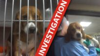 Cruel tests on dogs exposed!