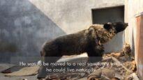 Cyril (Wolverine): Rick Wakeman Music Video