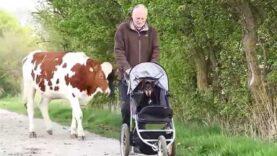 Der mit Hund und Kuh spazieren geht …….