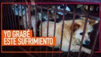 Desvelando la realidad de las mafias de traficantes de perros en China