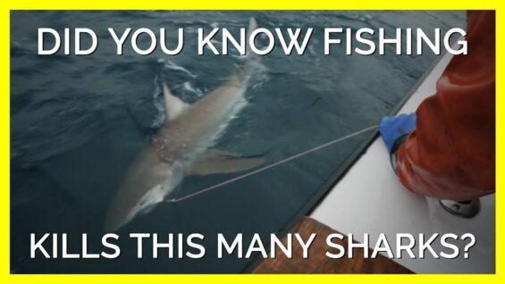 Did your Tuna Sandwich Kill a Shark? #shorts
