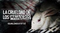 EL HORROR DE LOS MATADEROS | PROTECCIÓN ANIMAL #SHORTS