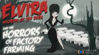 Elvira, Mistress of the Dark, and the Horrors of Factory Farming