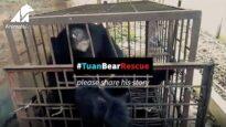 Emergency Bear Rescue from an Illegal Farm in Tam Duong