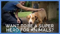 Ever Wanted to Be a Superhero for Animals?