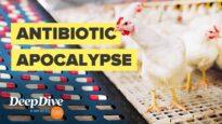 How factory farms help create antibiotic resistant superbugs