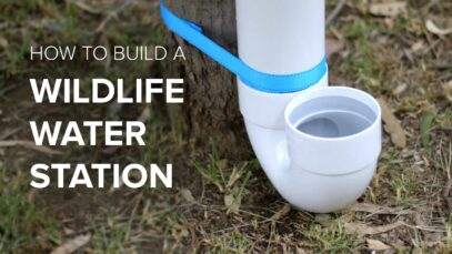 How to build a wildlife water station