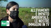 Impatto ambientale degli allevamenti: le nostre immagini su Rai 3