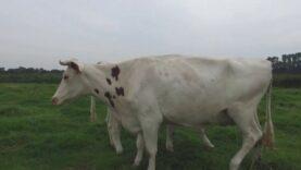 Jule und Mama Jette - Ein Muuhpedia-Beitrag zum Thema Milch