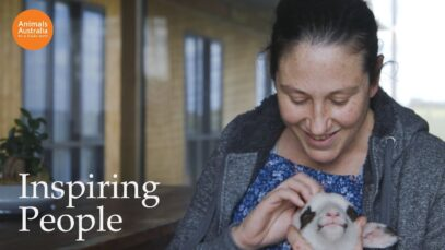 Karina rescues baby lambs from freezing in winter
