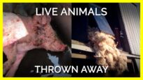 Live Animals Are Thrown Away Like Trash for These Industries