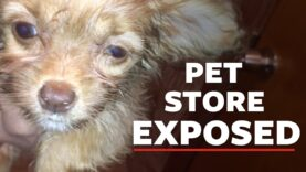 Mistreatment at NYC pet store