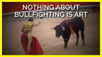 Nothing About Bullfighting Is Art