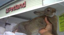 Rabbits are dying at Petland.