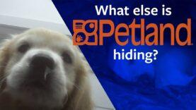 Shocking multi-store Petland investigation!