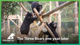 The Three Bears one year on…