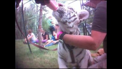 'Tiger King' – Joe Exotic: Undercover Investigation Footage