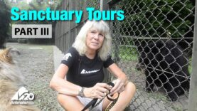 Tour China's only bear sanctuary with Jill Robinson (Part III)