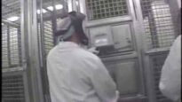 Undercover Footage: Chimpanzees Injected with Sedatives