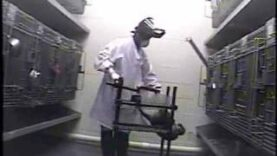 Undercover Footage: Monkey Restraint Devices