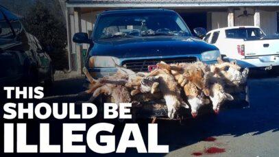 Undercover: Wildlife Killing Contests