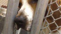 University Animal Lab Investigation; Narrated by Kim Basinger