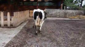 Uschis Ankunft auf Hof Butenland
