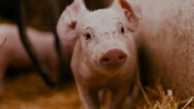 What would animals in factory farms dream of?