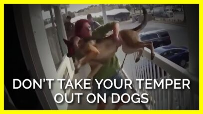 When Humans Have Temper Tantrums & Outbursts, Dogs Can Suffer