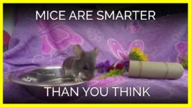 Which Fun Fact About Mice Surprised You the Most?