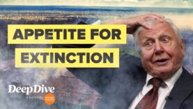 Why David Attenborough is worried about biodiversity loss