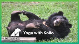 Yoga with Kollo
